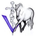 vet4motion Tanja Tesch Blog Tierarzt