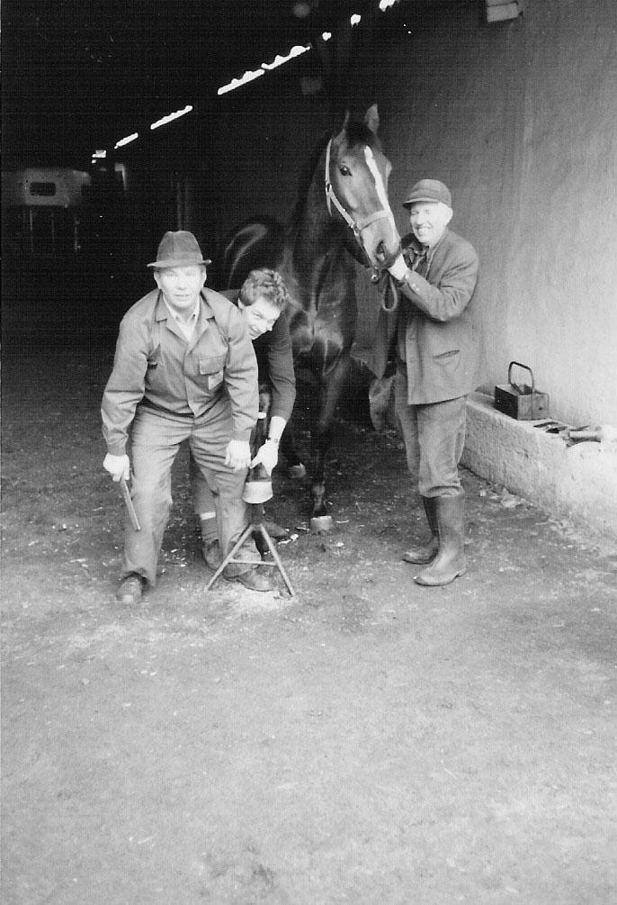 Tierärztin Braunschweig Pferde