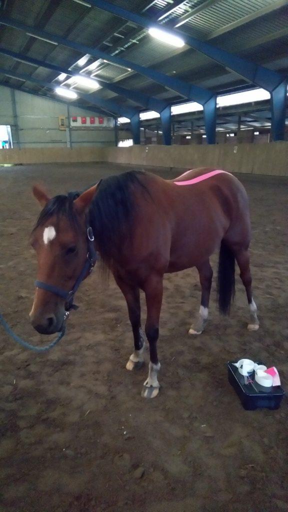 Pferde Taping Medizin Hannover Wolfsburg