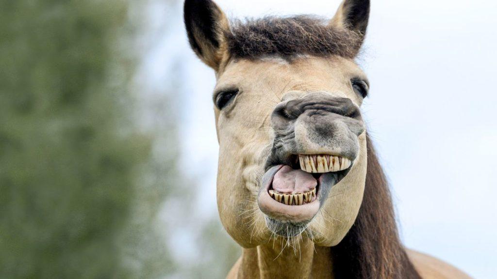 Pferde Zahnbehandlung Gifhorn