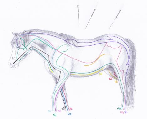 Pferde Akupunktur Hannover
